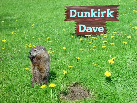 Dunkirk Dave sits outside his burrow at his handler