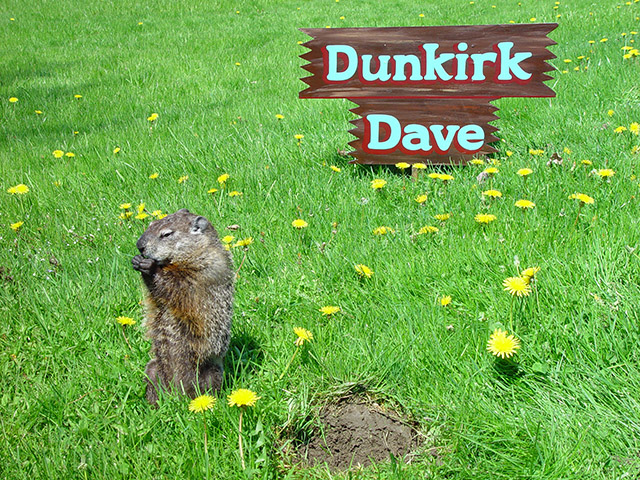 Dunkirk Dave sits outside his burrow at his handler's home in Dunkirk, New York.